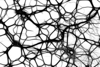 Neuronen Nervenzellen Vernetzung